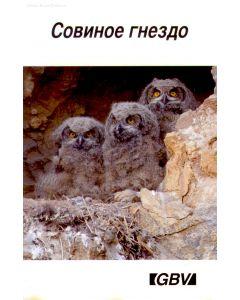 Совиное гнездо